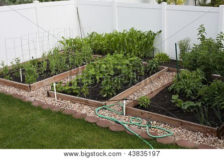 Backyard Organic Vegetable Garden