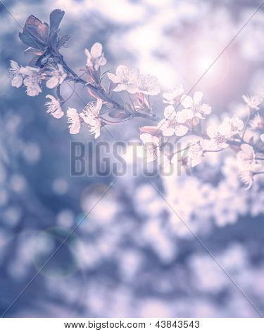 Cherry tree blossom, abstract natural background, grunge blue photo, fine art of spring season, little white flowers on tree branch, dreamy picture, fresh floral twig