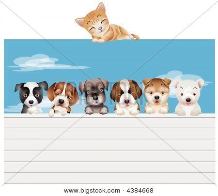 Dogs&cat