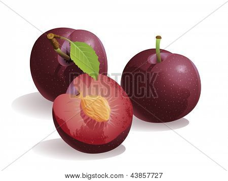 Plum, Isolated Vector Fruit
