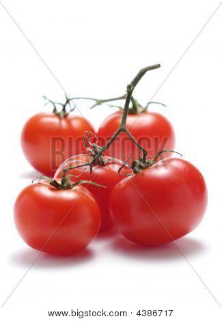 Five Tomatoes