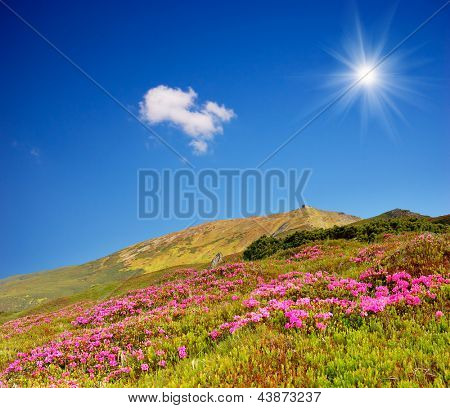 Spring landscape in the mountains. A bright sunny day and the flowering meadows