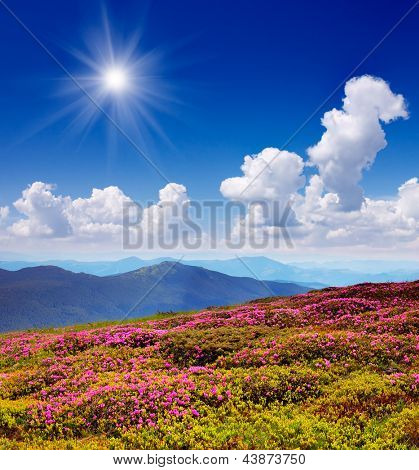 Sunny landscape with flowering mountain valleys