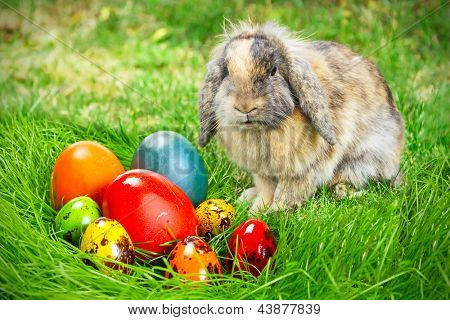 Adorable bunny and Easter eggs on the grass