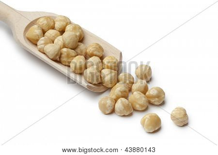 Fresh Macadamia nuts on a wooden spoon on white background