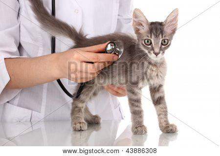Veterinario examinar un gatito aislado en blanco