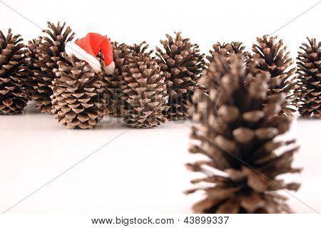 Photo of Santa Pine