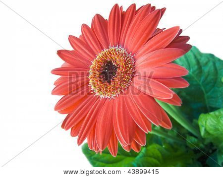 Photo of Floriculture