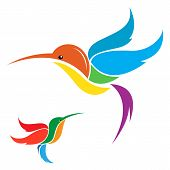 pic of hummingbirds  - Vector image of an hummingbird on white background - JPG