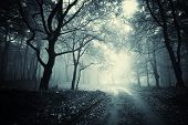 stock photo of trough  - Road trough a dark forest with fog on halloween - JPG