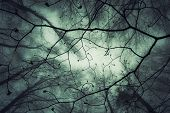 foto of eerie  - View up in the canopy in a magic enchanted forest with fog - JPG