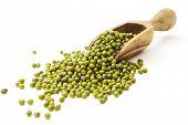 image of mung beans  - Mung beans - JPG