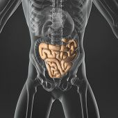 image of small-intestine  - An Illustration of a man - JPG