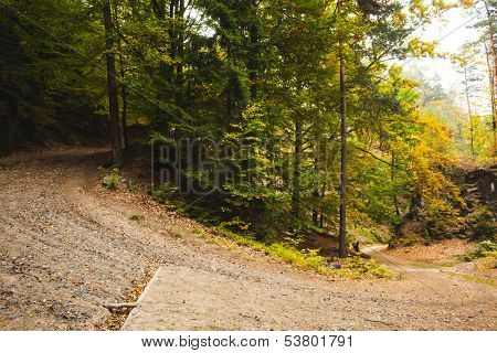 Tarmac curved country road along trees in forest