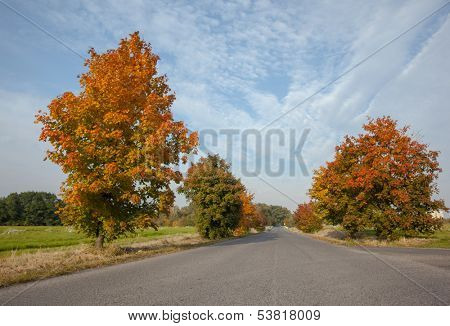 View of an empty tarmac country road along trees and landscape