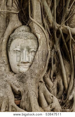Buddha head in banyan tree at Ayutthaya