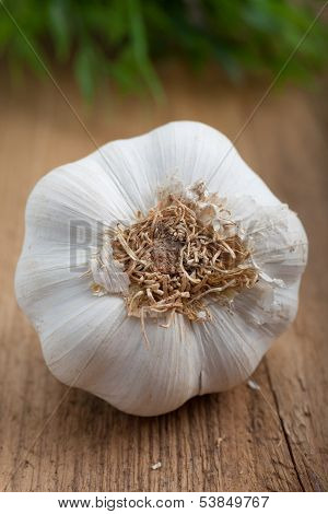 Bulb Of Fresh Garlic