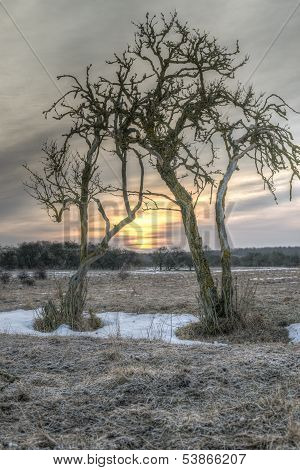 Sunrise Between Two Barren Trees
