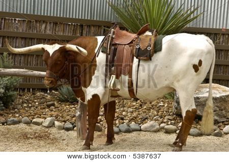Texas Longhorn And Saddle