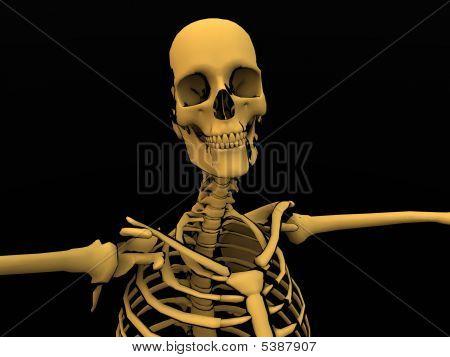 Cartoon Skeleton