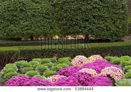 Chrysanthemum And Kale Garden Crossing