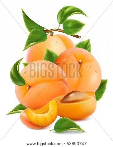 Vector illustration. Apricots with green leaves and water drops.