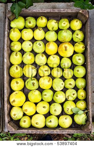 Green And Yellow Pears At A Famers Market May Use As Background, Close Up.