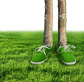 image of carbon-footprint  - Green carbon footprint environmental concept shoes growing trees - JPG