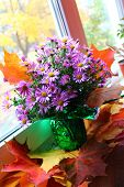 stock photo of pompous  - pompous in great blossom gaily colorful bouquet of the  autumn flowers on the red bright maple foliage - JPG