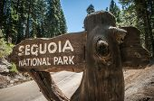 stock photo of sequoia-trees  - Sequoia sign entry in national park california - JPG