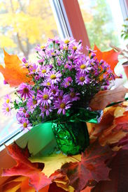 picture of pompous  - pompous in great blossom gaily colorful bouquet of the  autumn flowers on the red bright maple foliage - JPG