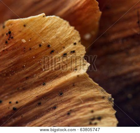 Fur-tree Cone.   Macro. Extreme Closeup