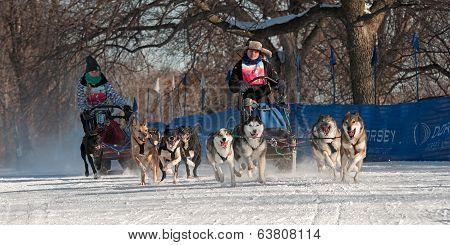 2014 Subaru Dogsled Loppet - Melissa Domino