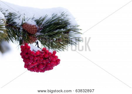 Red Mountain Ash Berries Christmas Tree Ornament