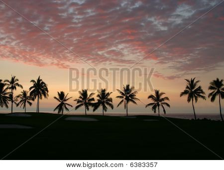 Silhoutte Of Palms On Golf Course At Sunset