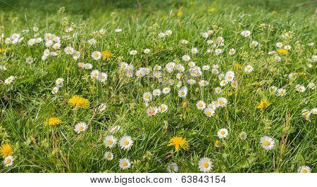 Blooming Wildflowers In A Meadow