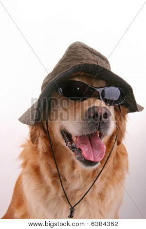dog with sunglasses and hat