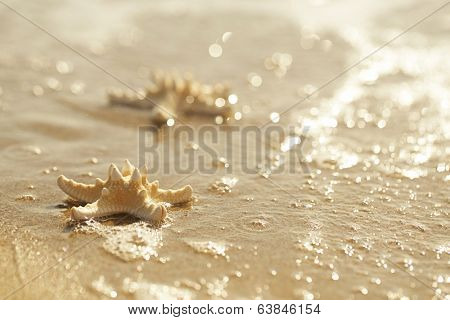 two starfish in golden sea waves, soft gentle sunrise light color