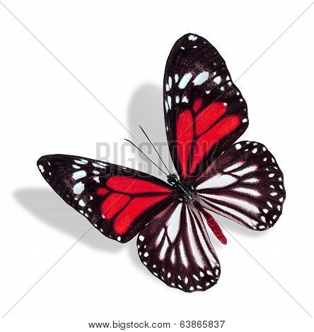 Flying Red And White Butterfly Isolated On White Background