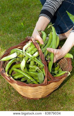 Woman Holding Broad Beans