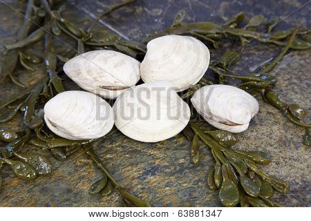 Clams and Seaweed on Flagstone