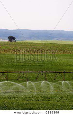 Irrigated fields