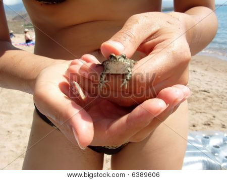 Frog in the hands