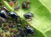 pic of wreckers  - Macro photo extreme close up aphid on a leaf  - JPG
