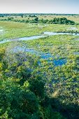 image of wetland  - Elevated view of Pantanal Wetland - JPG
