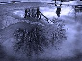 stock photo of cobblestone  - Puddle reflection of tree and person walking past cobblestone walkway - JPG