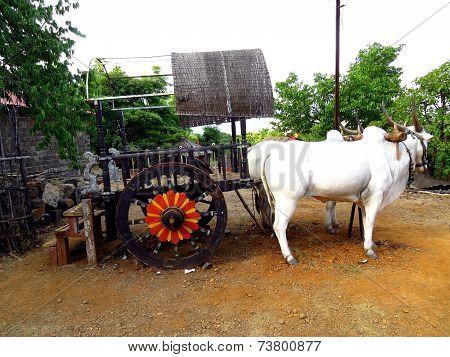Indian Bullock Cart
