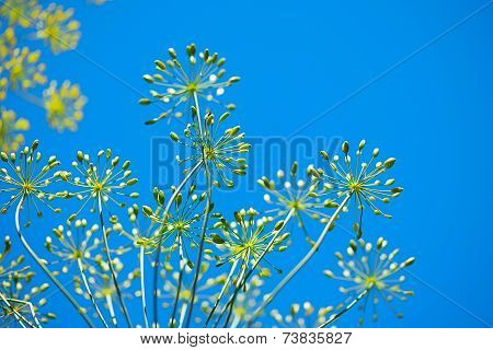 Blue Sky Spring Floral Background