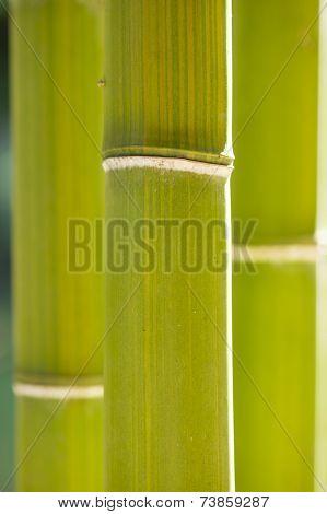 Bamboo Cane Detail