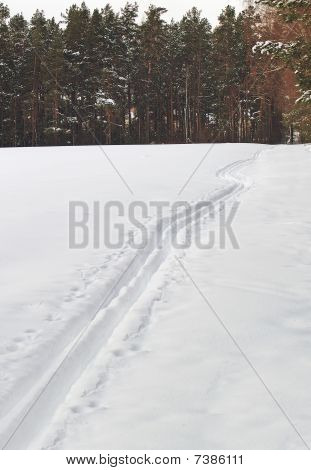 Ski Track In Winter Wood